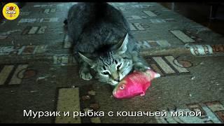 Рыбка с кошачьей мятой