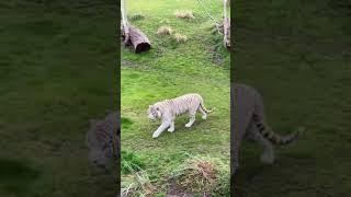 Tigre- Temaikèn