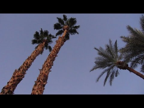 My Life In Palm Springs (2013) - Part 3