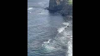 «Хабаровчан ждут»: стаю акул сняли на видео возле Русского острова