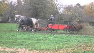 Epandage de fumier par traction animale, fait par Les Roulottes de la Suisse-Normande