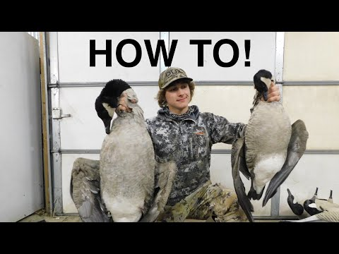 How to Clean a Goose! Lesser and Greater!