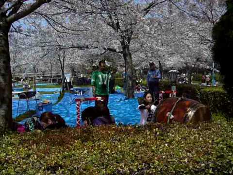 大阪毛馬桜之宮公園 櫻宮地車囃子とお花見 - YouTube