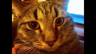 Классные И Очень Смешные Кошки 06