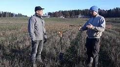 Kerääjäkasvien viljelykokemuksia: Tuomas Mattila, Kilpiän tila, Lohja (koko haastattelu)