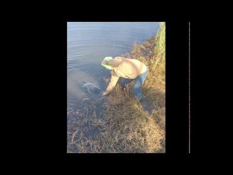 Monster Catfish Catch in Cape Fear River [Extended Version]
