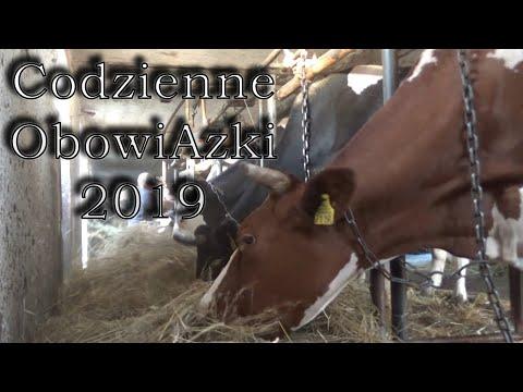 Dojenie-Obrządek-Natrzepywanie Krowy#Codzienne Obowiązki 2019
