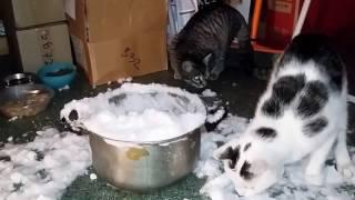 Кот отрывается по полной 😃❤👍😉🐾 |Снег | Зима | Коты в приюте  funny cats in the shelter