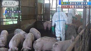 豚コレラ対策のワクチン接種 慎重姿勢を見直しへ(19/09/20)