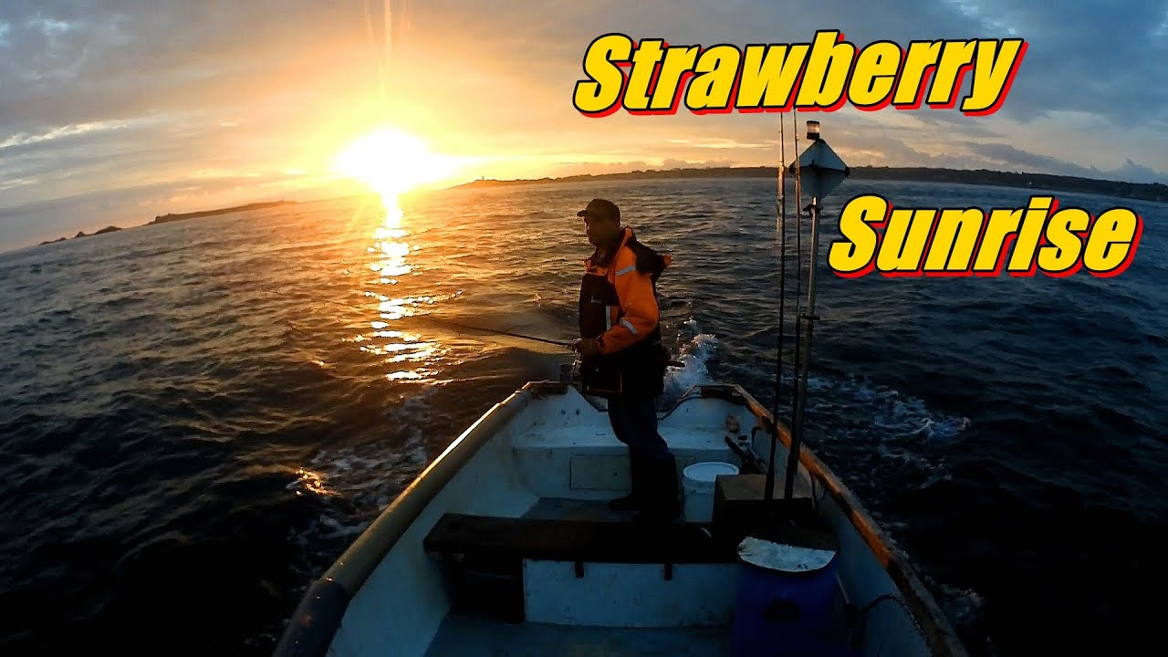 Strawberry Sunrise & Fishing - Catching Bass, Mackerel, Pollack, Brown Crab, Spider Crab, Lobster