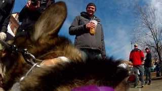 Saint Louis Mardi Gras Dog Parade 2014