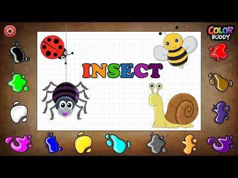 Color  buddy - Insect funny