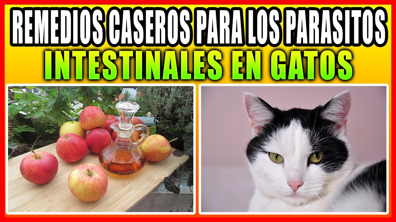 PARASITOS EN GATOS PDF
