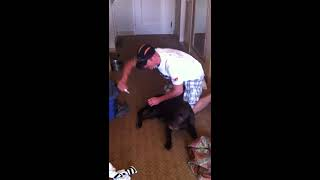 Repeat youtube video Brown Dog Enema
