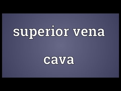 Superior vena cava Meaning