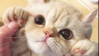 Cute is Not Enough - Funny Cats and Dogs Compilation