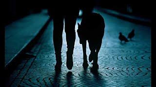 3 Disturbing TRUE Dog Walking Horror Stories