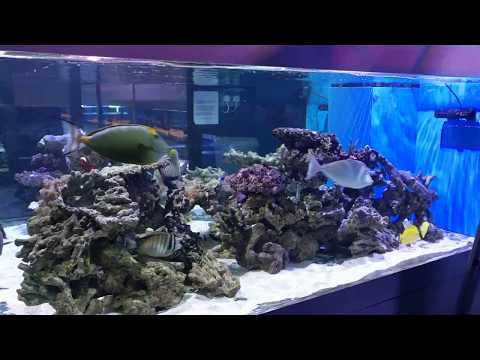 Huge marine fish tank and corals 2018