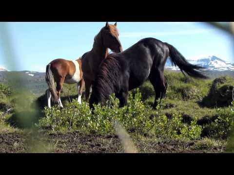 Lopen Door IJsland 2013