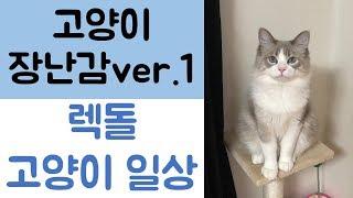 [고양이 렉돌] 고양이 장난감 반응