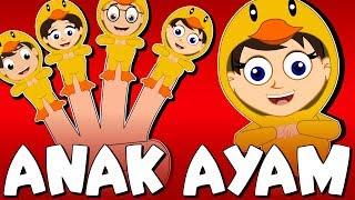 [13.68 MB] Tek kotek kotek   Versi baru   Lagu Anak-Anak Indonesia Terpopuler   Kumpulan   Lagu Anak TV