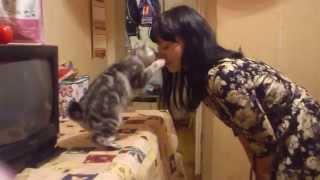 Кошка соскучилась по хозяйке!!!!