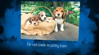 Pitbull Puppy Training Tips | Puppy Potty Training Tips | tips for potty training a puppy | Crate
