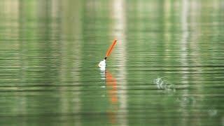 Рыбалка с ночевкой ЛУЧШАЯ СНАСТЬ ДЛЯ ЛОВЛИ КРУПНОГО КАРАСЯ И САЗАНА(часть 1)