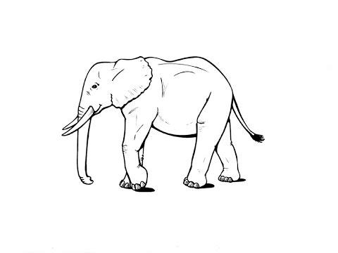 Как нарисовать слона видео