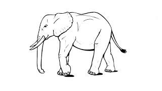 How to Draw an Elephant / Как нарисовать слона(Drawing Channel - https://www.youtube.com/channel/UCaZm6IvtL9zNeDwQi571asA/videos Канал для рисования ..., 2015-04-25T19:26:03.000Z)