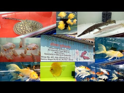 AQUA UNIVERSAL KURLA FISH MARKET