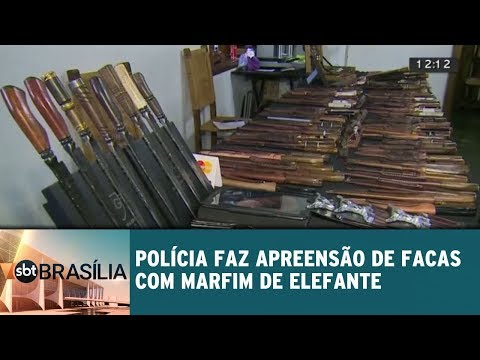 Polícia faz apreensão de facas com marfim de elefante