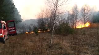 Pożar lasu Olechów/ 14.03.2014 /ul. NERY  ANDRZEJÓW