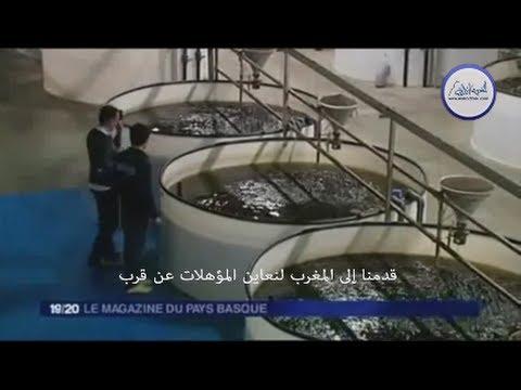 Noune Maroc Aquaculture : une visite au royaume des civelles