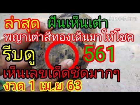 พญาเต่าสีทอง เดินมาให้โชค เห็นเลขเด็ด 2ตัว 3ตัวจะๆชัดมาก บนล่าง งวด1เมษายน2563