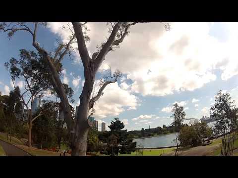 Cacatoès @ Royal Botanic Garden, Sydney