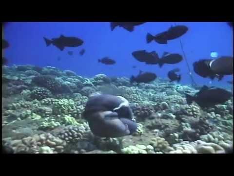 Viper Moray Eel Attacks Octopus