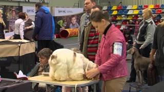 В Олимпийском собралось более тысячи собак