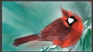 Drawing a red Cardinal