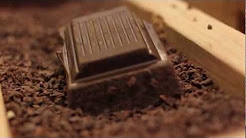 The Northwest Chocolate Festival 2012