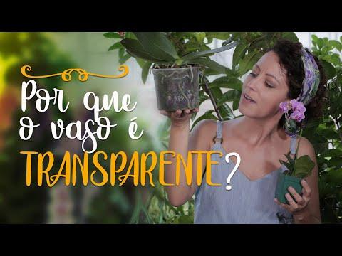 Academia das Maravilhas (Coreografia) from YouTube · Duration:  2 minutes 15 seconds