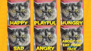 Learn How To Speak Cat