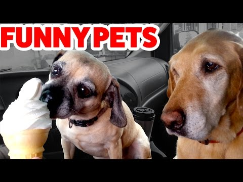 Funniest Cat, Dog & Pets Home Videos Weekly Compilation   Funny Pet Videos