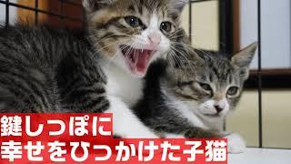 人間が信じられなかった子猫、新しいお家で幸せになる