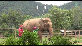 How To Treat Elephant With Digestion Problem - ElephantNews