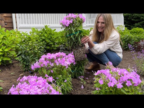 How to Plant Perennials!   Gardening Tips for Beginners