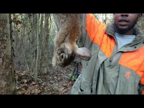 Charlie P's 12 Pack -Rabbit Hunting