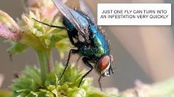 HOW TO GET RID OF FLIES & FLY CONTROL UK ~ CATCH-IT LTD PEST CONTROL LONDON