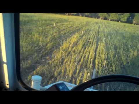Spraying off cereal rye after planting soybeans