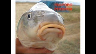 Рыбалка в Крыму. Уварово. Реквием.